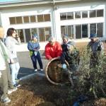 もみの木の移植